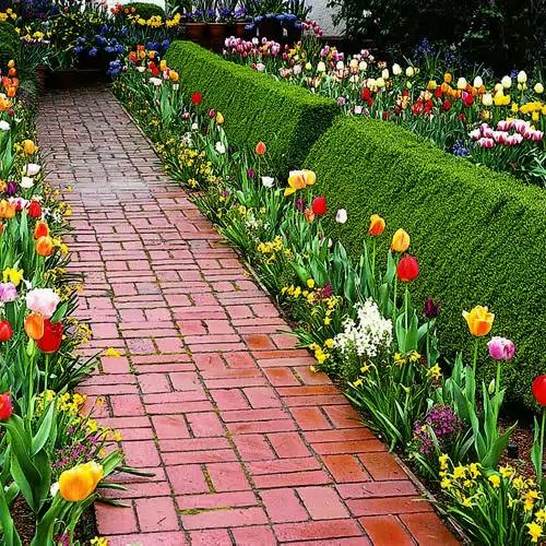10 Bulb Garden Design Ideas: Prolećne Lukovice Cveća