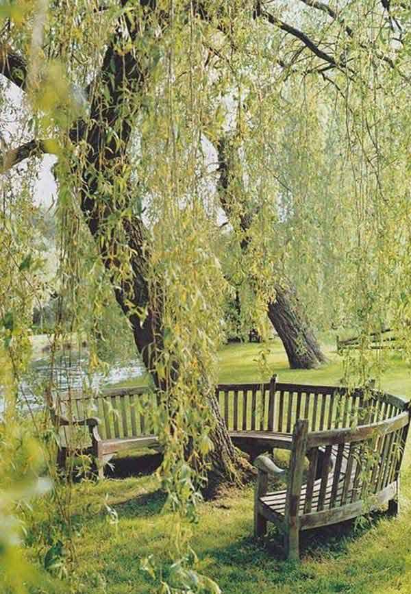 sediste oko drveta 19