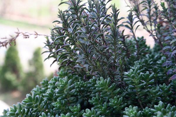 zacinske biljke i sukulenti