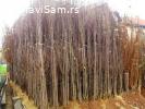 NASTIC rasadnik - razne vocne sadnice