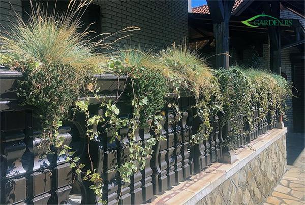urbane terase trajnice perene