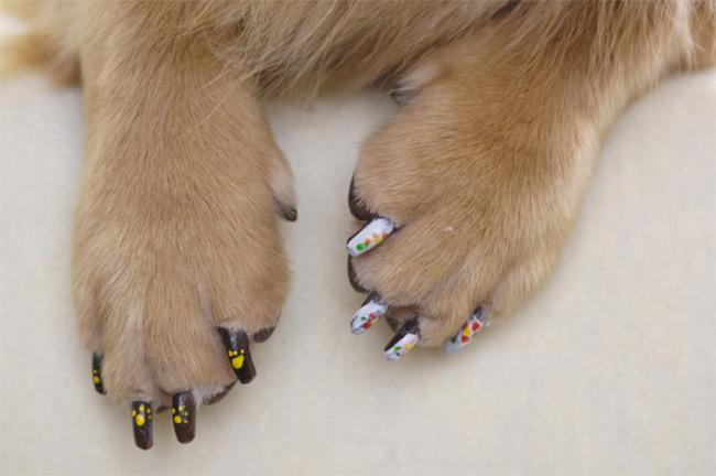 Nalakirajte psu nokte